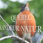 Québec- Grandeur Nature