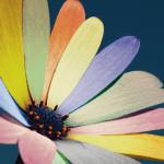 TUTO // Des pétales de couleurs différentes