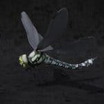 TUTO // Création d'insectes et d'araignées sur Blender